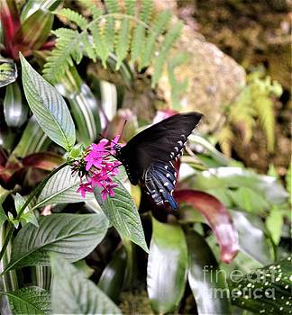 Black Swallowtail by Brigitte Emme