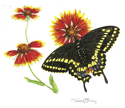 Black Swallowtail by Michael Earney