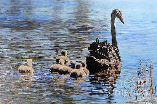 Black Swan and Cygnets No 2 by Ryn Shell