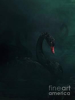 Black swan by Mythja Photography