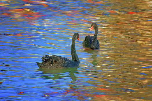 Nikolyn McDonald - Black Swans - Swimming