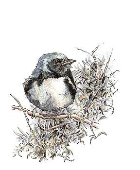Black-throated Blue Warbler by Abby McBride