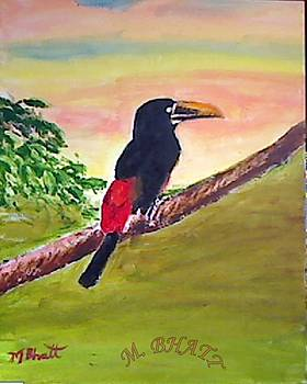Black Toucan by M bhatt