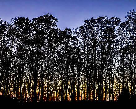 onyonet  photo studios - Black Trees