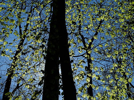 Martin Stankewitz - black trunks spring leaves