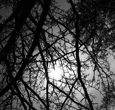 Black Walnut Spikes by Anna Villarreal Garbis