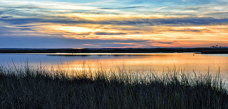 Blackwater Wildlife Refuge - Eastern Shore by Brendan Reals