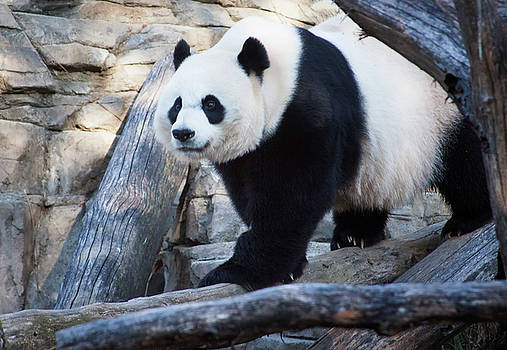 Black, White and adorable by Ruth Jolly