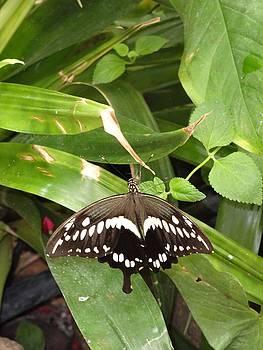 Black White Butterfly Green All Over by Mozelle Beigel Martin