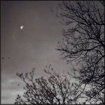 #blackandwhite #moon #iphoneography by Judy Green