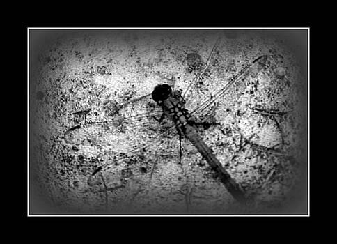 Blackandwhitedragon by Vanessa Reed
