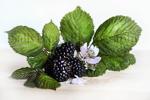 Blackberries I Textured by Sally Bauer