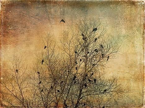 Dee Flouton - Blackbird Congregation