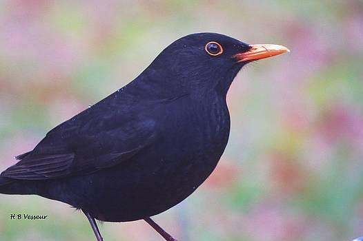 Blackbird In Rain by B Vesseur