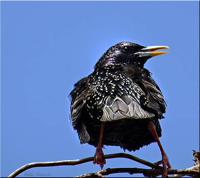 Blackbird by Mikki Cucuzzo