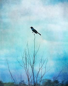 Blackbird on Tree Branches, Blackbird Blue Sky by Melissa Bittinger