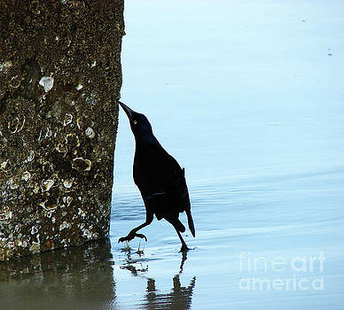 Blackbird on Tybee Island by Leara Nicole Morris-Clark