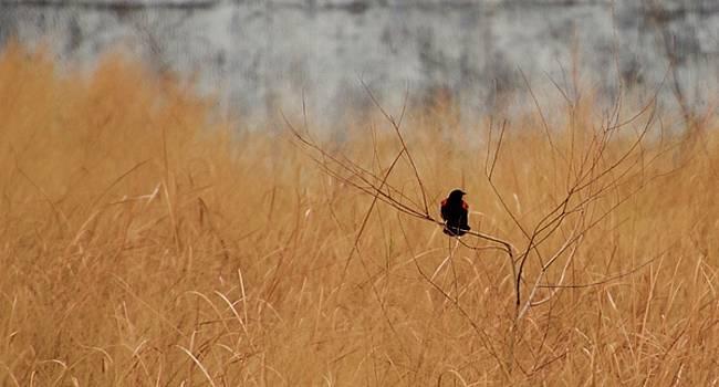Blackbird by Risa Bender