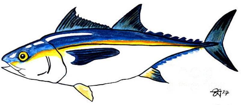 Blackfin Tuna Fishing Fish by Jackie Carpenter