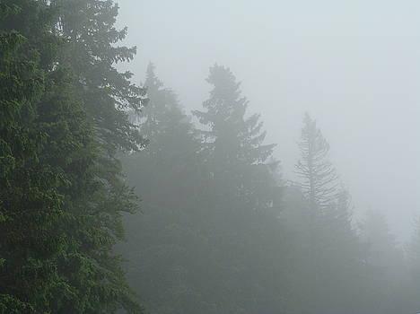 Blackforest Mist 2 by Martin Bellmann