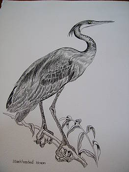 Blackheaded Heron by Dion Halliday