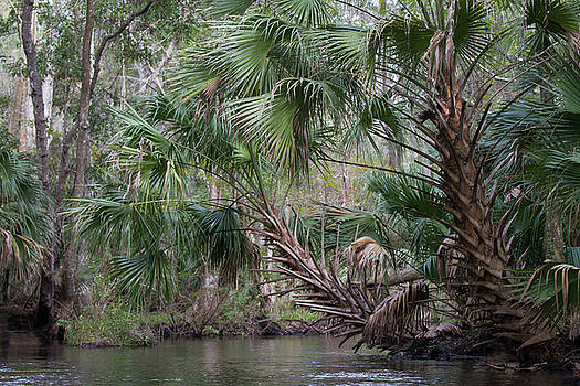 Paul Rebmann - Blackwater Creek Palms