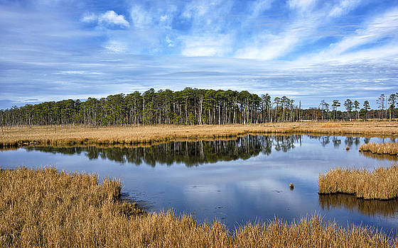 Blackwater National Wildlife Refuge by Brendan Reals