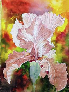 Blazing Iris by Glen Ward