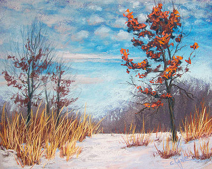 Blazing Winter Grasses by Christine Camp