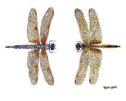 Bleached Skimmer and Hyacinth Glider by Thom Glace