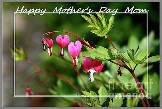 Sandra Huston - Bleeding Hearts for Mom