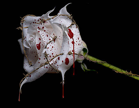 Bleeding Rose by Lori Hutchison