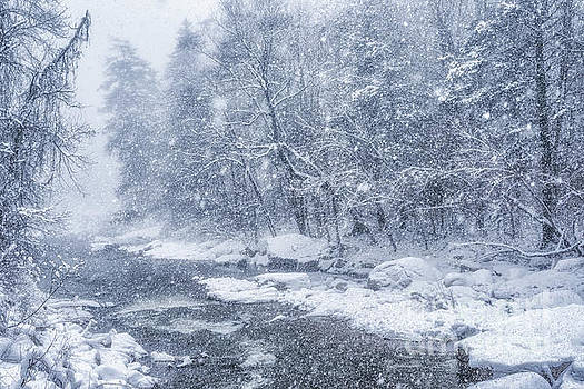 Blizzard Conditions on Williams River by Thomas R Fletcher