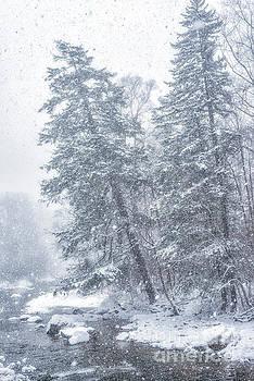 Blizzard on Williams River by Thomas R Fletcher