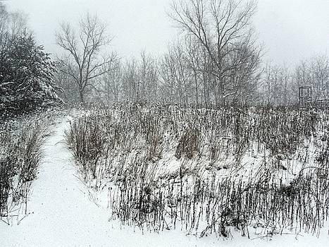 Blizzard, Wisconsin 2006 by Chris Honeyman
