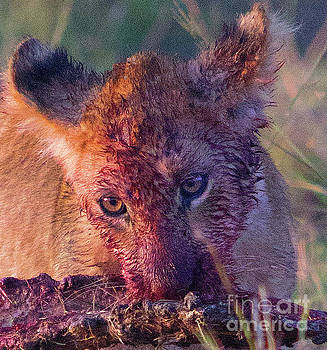 Bloody Cub by Beth Jacobs