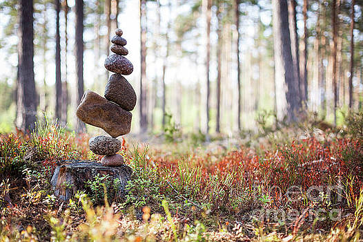 Blomma by Pontus Jansson