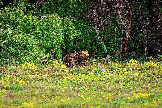 Blondie in the Wildflowers by Greg Norrell