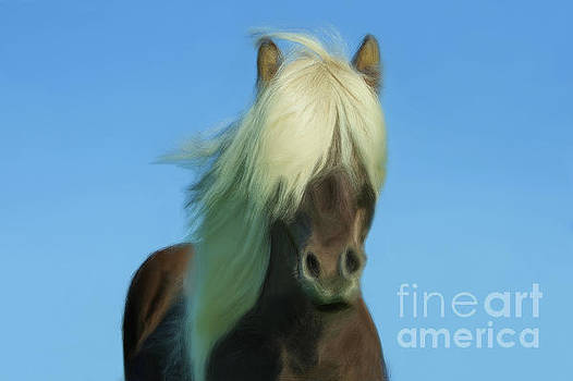 Blondie by Sharon Kingston