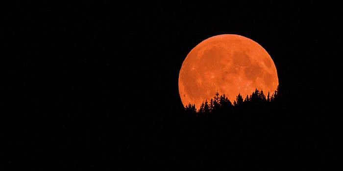 Blood Moon by Joy McAdams