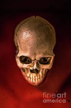 Blood Pool Skull by Edward Fielding