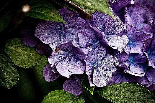 Bloom by Phobeke Photographie Bernd Keller
