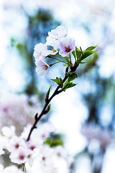 Bloom by Daniel Chen