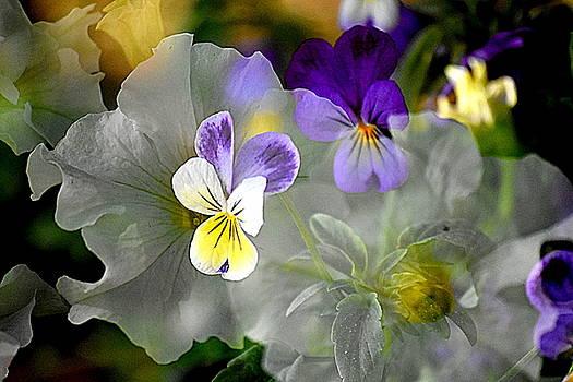 Bloom Explosion by Sherry McKellar