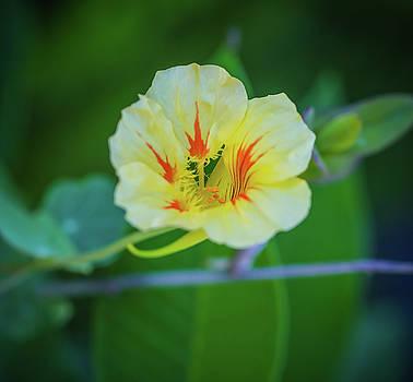 Bloom by Hyuntae Kim
