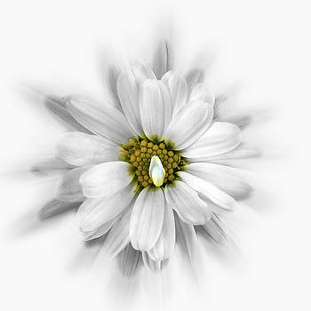 Bloom In Shades Of White by Marinela Feier