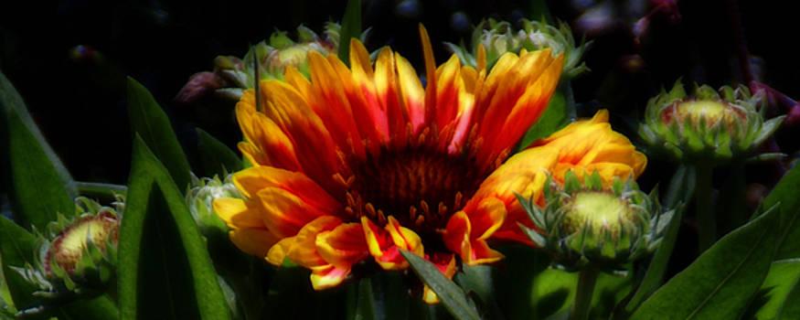 Linda Shafer - Bloom
