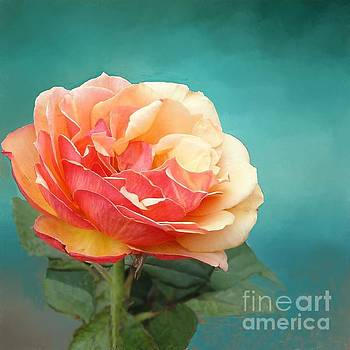 Perfect Rose of Spring by Janette Boyd
