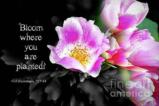 Bloom where you are planted by Debbie Nobile