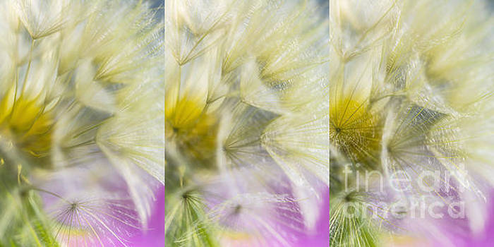 Bloomed 3 by Veikko Suikkanen